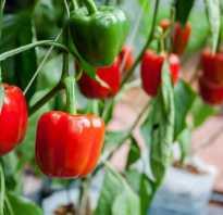 Выращивание болгарского перца советы октябрины ганичкиной