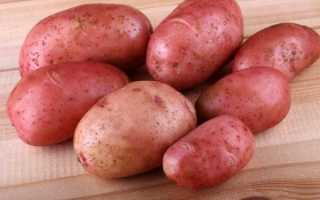 Характеристика описание урожайность отзывы и фото сорта картофеля крымская роза