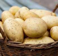 15 самых вкусных и урожайных сортов картофеля