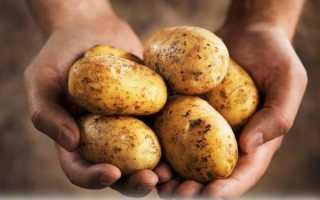 Можна ли поросятам варенные шкурки картофеля