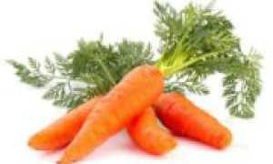 Способы сушки моркови дома