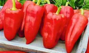 Перец джипси описание урожайность отзывы