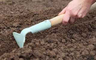 Как правильно подготовить грядки под морковь весной
